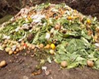 Food Residue,Daily Trashes